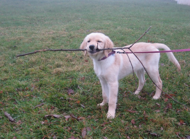 baby cassie with stick