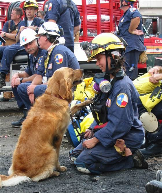 Rescue Dog 2