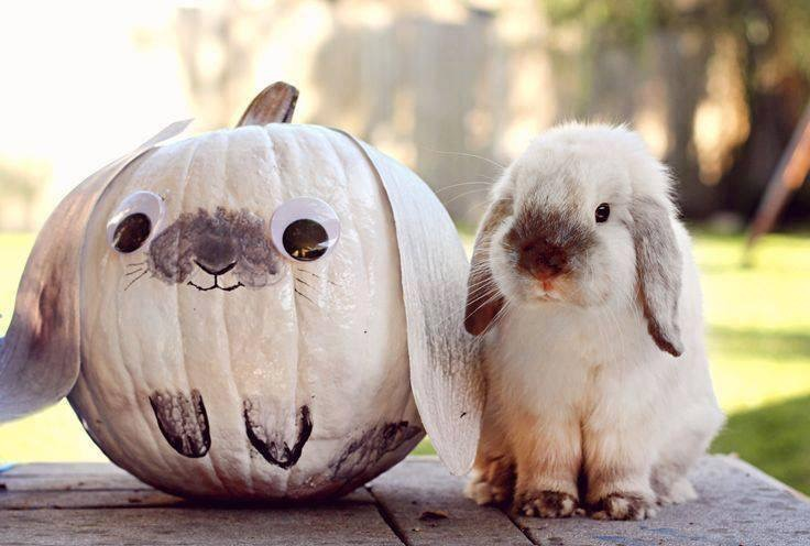 bunny pumpkin
