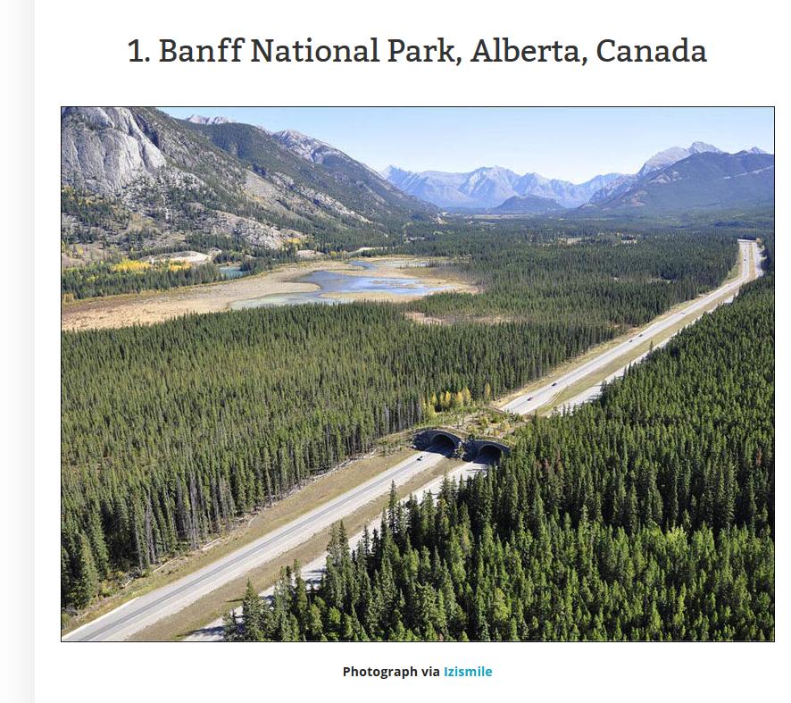 nature overpass, canada